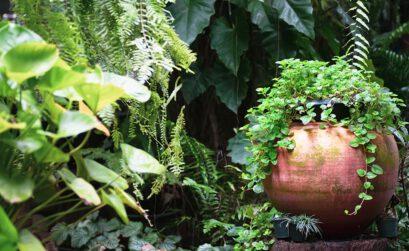 München, Anfänger, Läuse; Zimmerpflanzen, Pflanzen, Töpfe